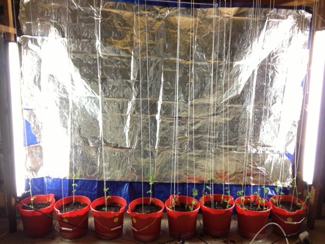 Cellar Garden Experiment - Artificial greenhouse