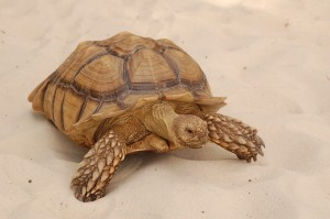 Stock photo - tortoise