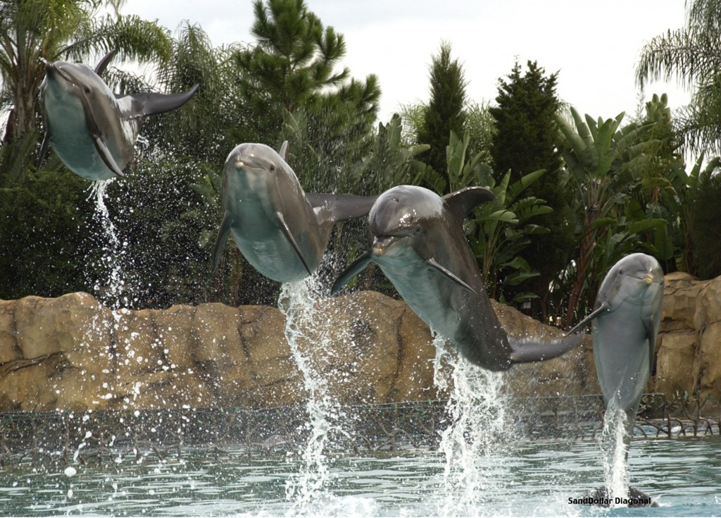 Stock photo - Dolphins jumping